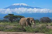 Climbing Mount Kilimanjaro Via Machame Route
